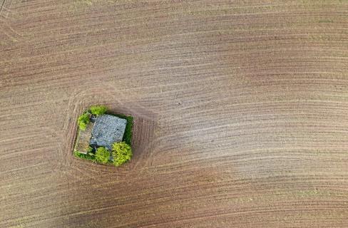 Insel auf dem Feld w