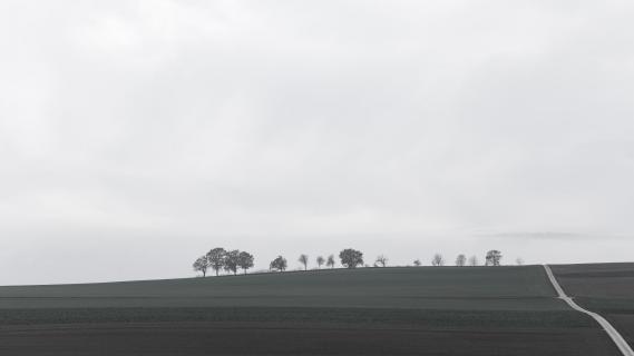 Baumreihe