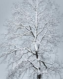 52 Winterbild_Alexander_Gellner