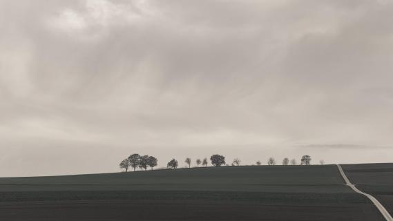 Baumreihe abstrakt