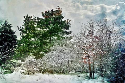 HDR Winter am Hainberg