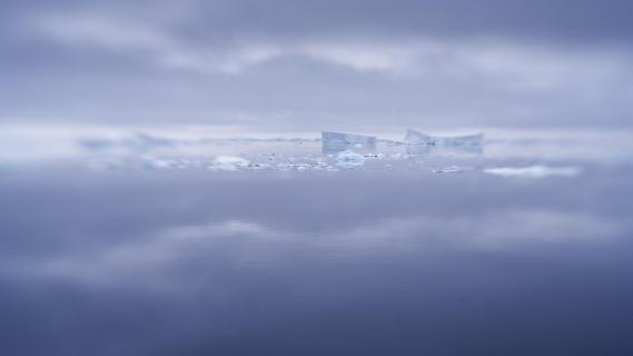 Antarctic Mood