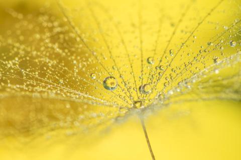 Gelb wie die Sonne