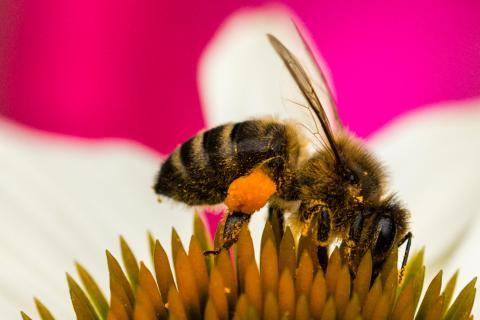Fleißige Biene (1 von 1)