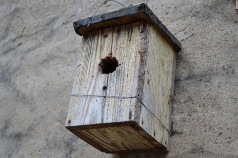 Vögelein