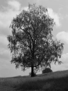 Der schöne Baum