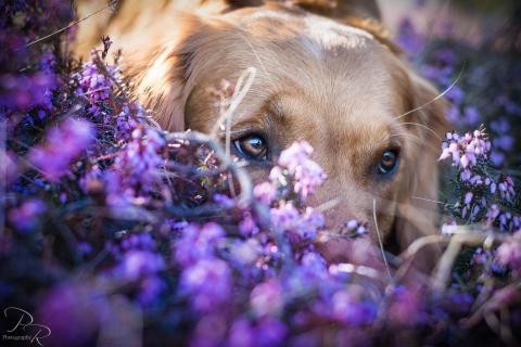 12 Fotografieren Sie ein Haustier_Patrick_Reiter