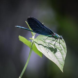 Libelle beim Sonnenbaden