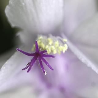 Blütenstempel einer Orchidee