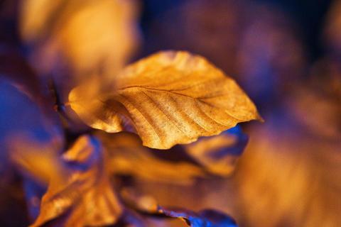 golden nature