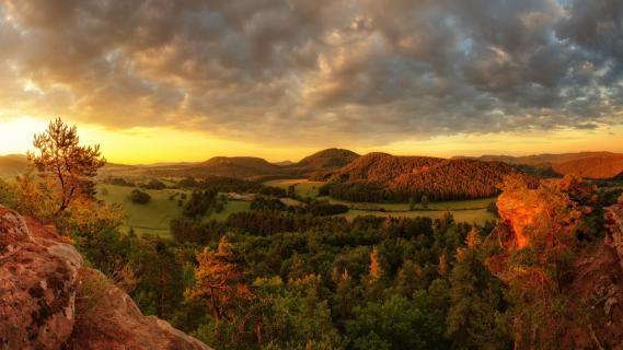 Sprinzelfelsen, Pfälzerwald