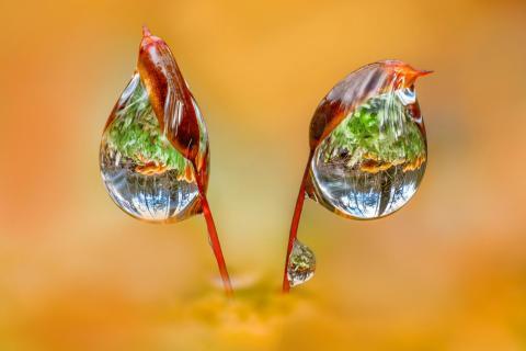 Pilz Reflexion in Wassertropfen