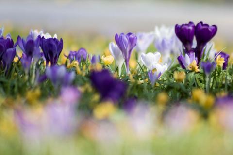 07 fangen sie den Frühling ein_Björn Sandring