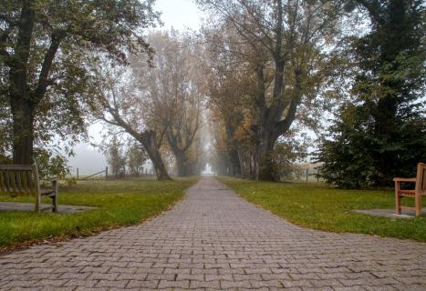 39 Herbst im Nebel_Björn_Sandring