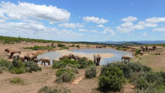 Elefantentreff