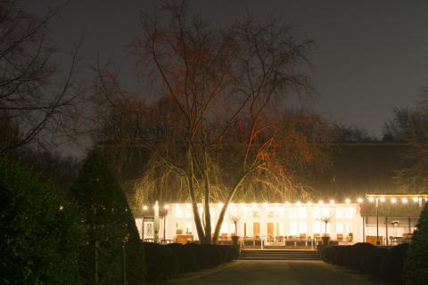 Wunderbaum am Haus