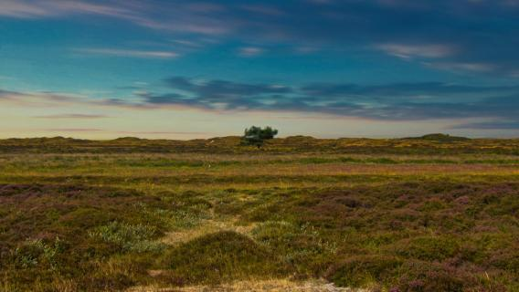 Baum Dünen Texel