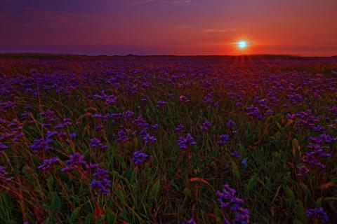 De Slufter Sonnenuntergang Blumen Texel