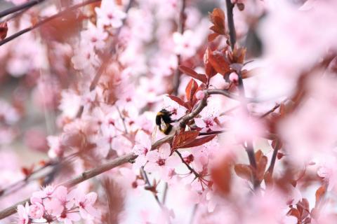 07_Fang den Frühling ein_Anja_Haumann