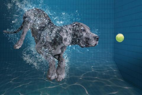 SplashDog