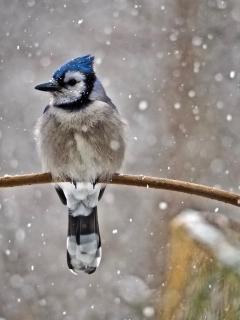 52 Fotografieren Sie ein Winterbild_Mirjam Radke