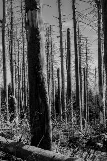 Bäume_Edward_Naya