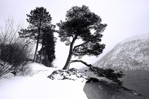 Wintergrafik