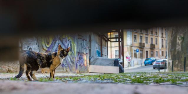 In den Strassen Lissabons