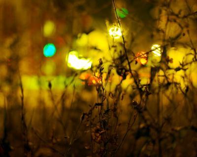 Urban Summernights