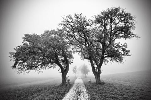 Die alten Bäume