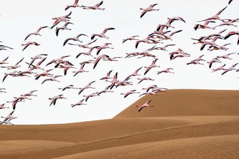 TOP Namibia 2019 Flamingo_Überflug