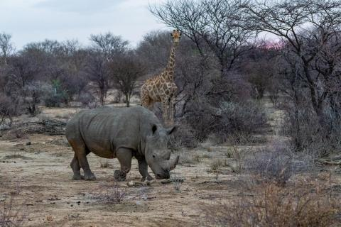 TOP Namibia 2019 Nashorn