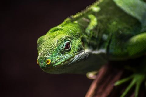 Reptil beim Sonnenbad