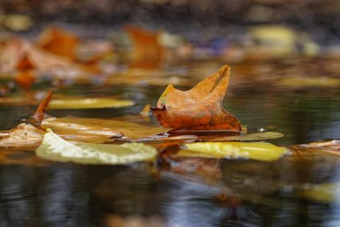 Der goldene Herbst verlässt uns
