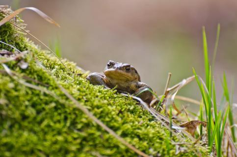31 Aus der Sicht des Frosches_Michael_Weirauch.jepg