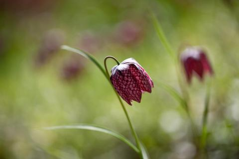 7 Fangen Sie den Frühling ein_Dagmar_Jordan.jpg