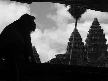 Affe bei Angkor Wat, Siem Reap, Kambodscha