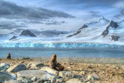 Seebären in der Antarktis