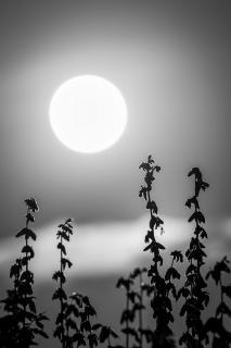 Schnake im Mondlicht