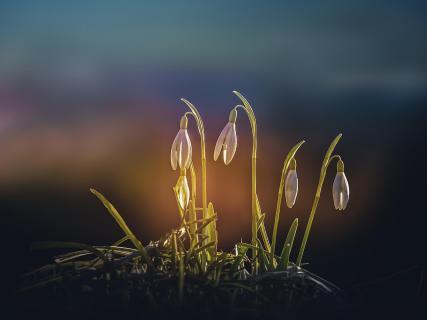 07 Fangen Sie den Frühling ein_Friedrich_Fuchshuber