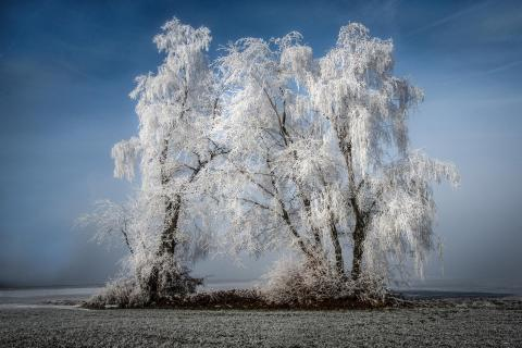 10 Baumstarke Fotos_Friedrich_Fuchshuber