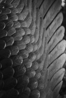 Die Schwinge des Adlers