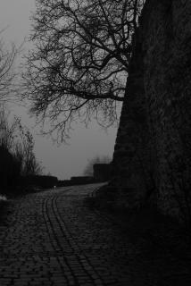 Pflasterweg im Nebel