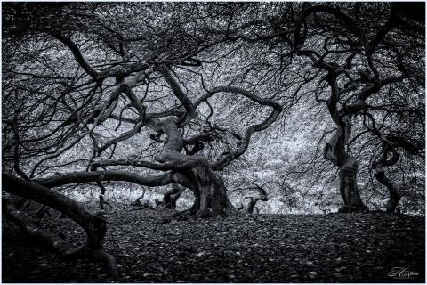 Der Hexenwald auf Rügen
