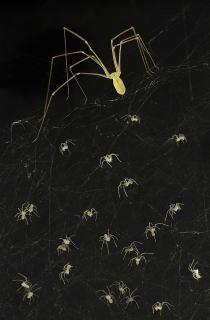Wakis Spinnen