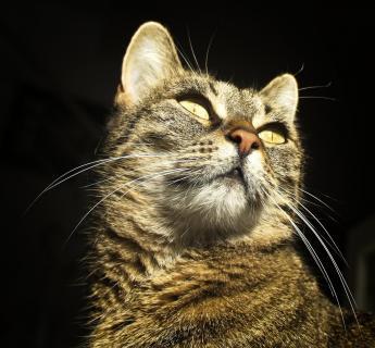 12 Fotografieren Sie ein-Haustier_Susanne-Steele