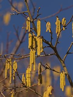 7 Fangen Sie den-Frühling-ein_Susanne-Steele