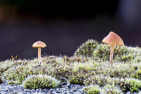 Kleine Wald-Welt auf dem Mauerpfosten