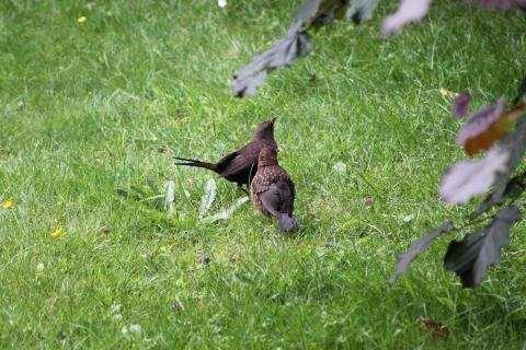 Vögel im Garten.