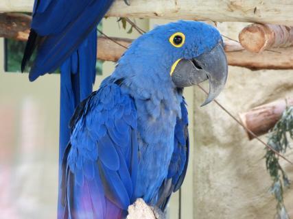 Blue - Ein Rio Held